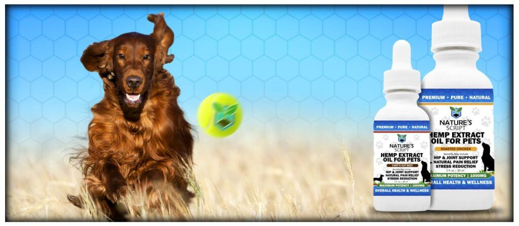 Golden Retriever chasing tennis ball CBD Oil for Pets preview